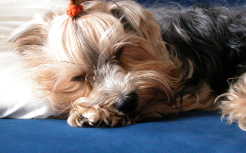 Rosie Sleeps