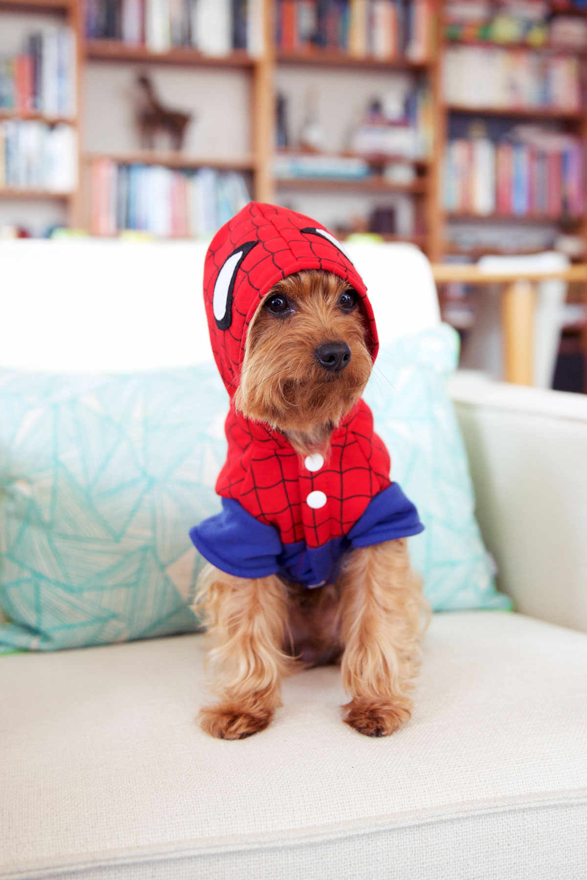 Spider Hood